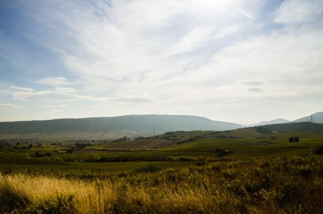 Les vignes de la vallée d'Agly