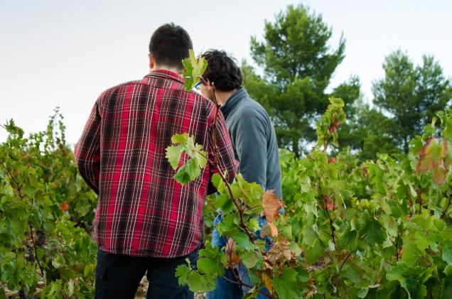 Que ntin et Jérôme dans les vignes de Grenache